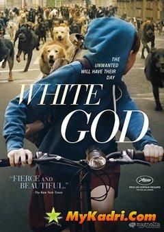 თეთრი ღმერთი / White God